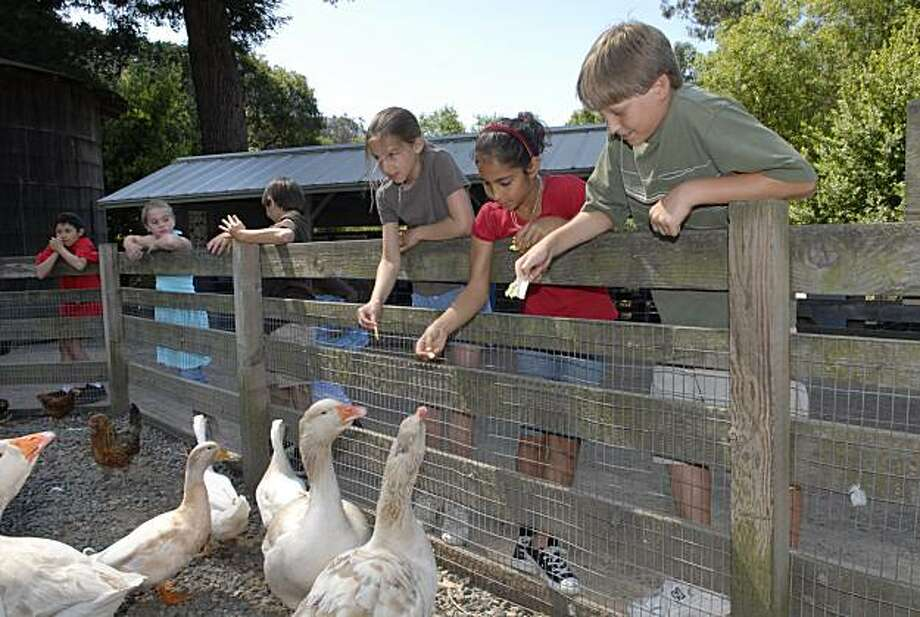 Children feed animals at the Tilden Nature Area. Photo: East Bay Regional Park District