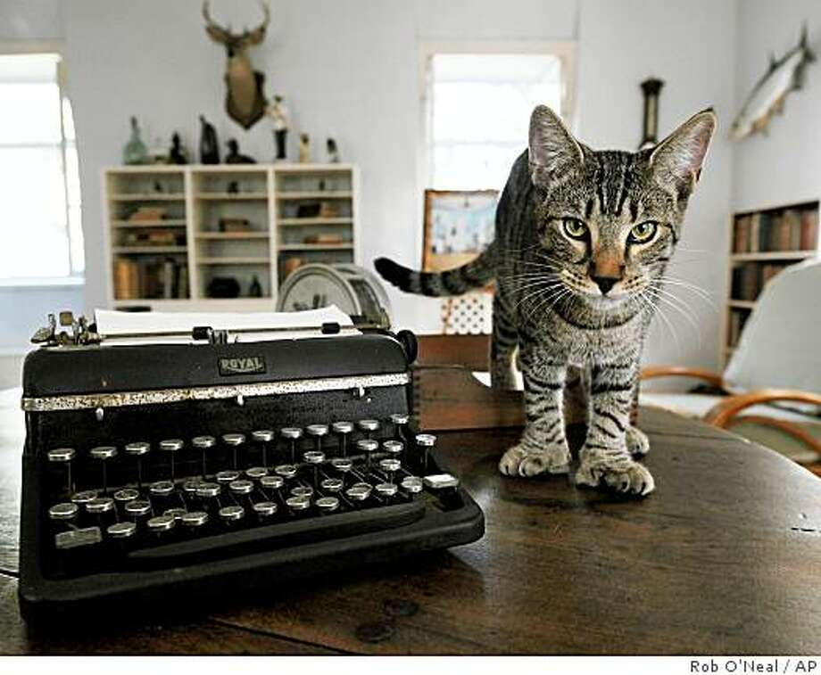 "In this photo released by the Florida Keys News Bureau, a six-toed cat named ""Hairy Truman,"" walks on a table Thursday, Sept. 25, 2008 in Ernest Hemingway's one-time study at the Ernest Hemingway Home and Museum in Key West, Fla. Hemingway Home officials announced Thursday that the United States Department of Agriculture had granted the museum an Animal Welfare License to permit legal exhibition of about 50 resident cats. The license culminates an almost five-year dispute between the USDA and the museum that might have resulted in the loss or caging of the famous felines, many that have six toes and descended from a cat given to Hemingway in 1935. (AP Photo/Florida Keys News Bureau, Rob O'Neal) ** NO SALES ** Photo: Rob O'Neal, AP"