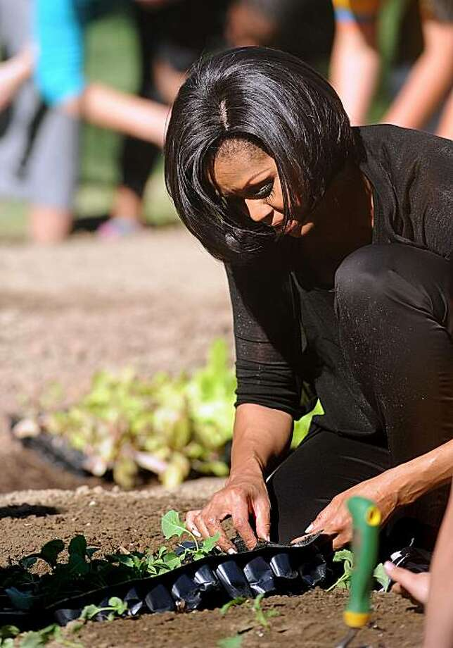 First lady Michelle Obama gets her hands dirty as she plays host to the Spring Garden Planting in the White House Kitchen Garden at the White House in Washington, D.C., on Wednesday, March 31, 2010. Photo: Olivier Douliery, MCT