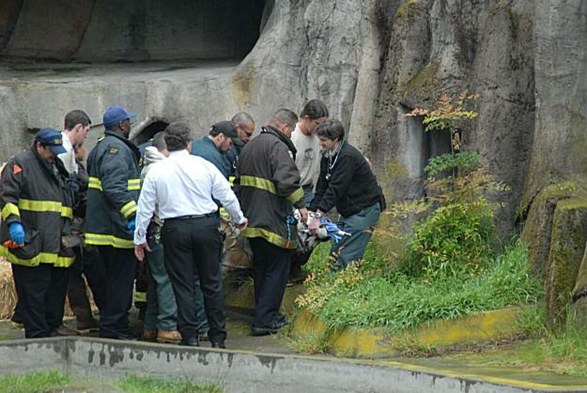 Tony the tiger is rescued by SF firefighters and zoo officials after refusing to leave the moat of his enclosure.