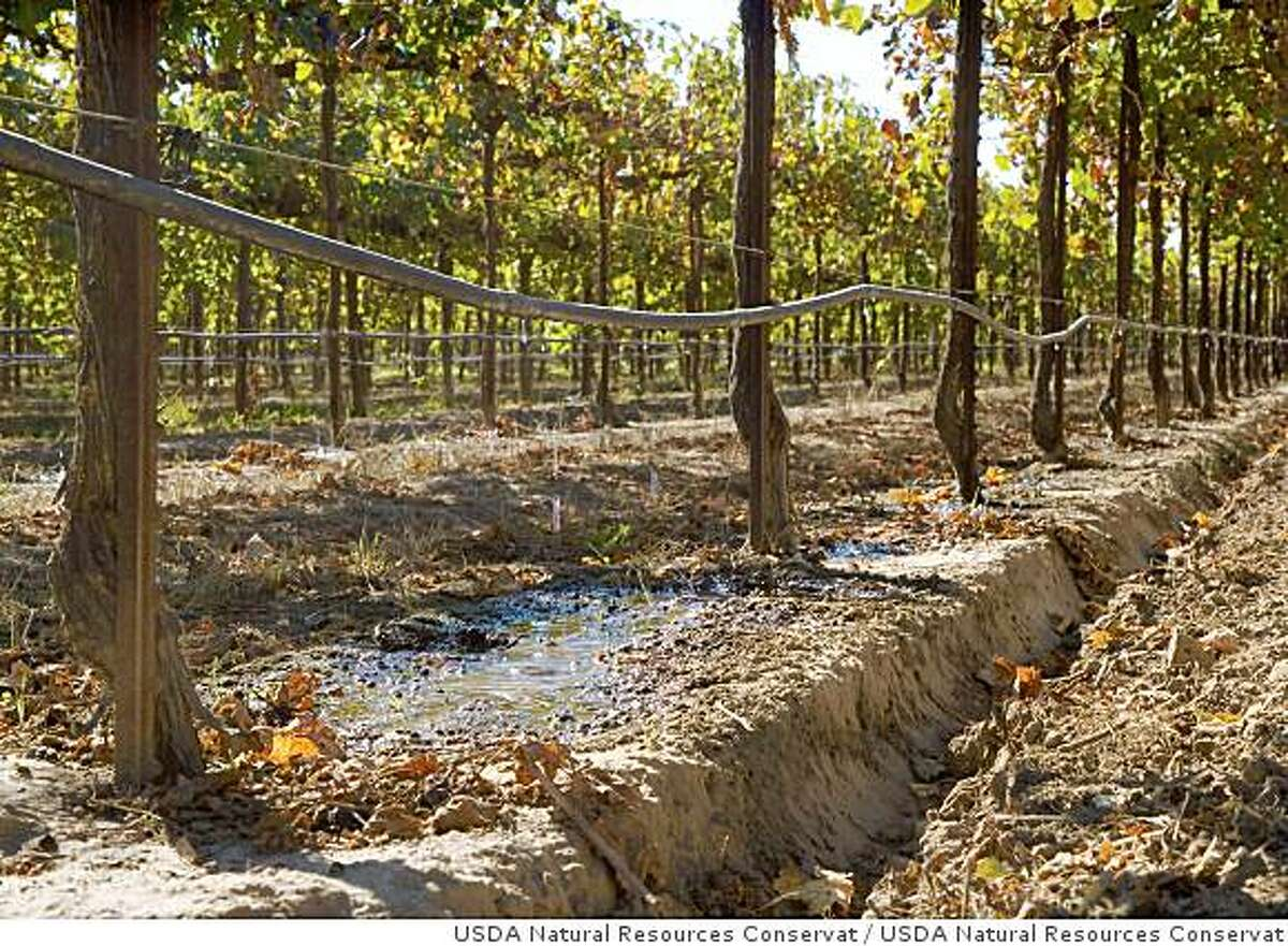 Drip irrigation in a vineyard avoids overwatering grapes. More efficient irrigation technology can help California farmers conserve water.Drip irrigation in a vineyard in California.
