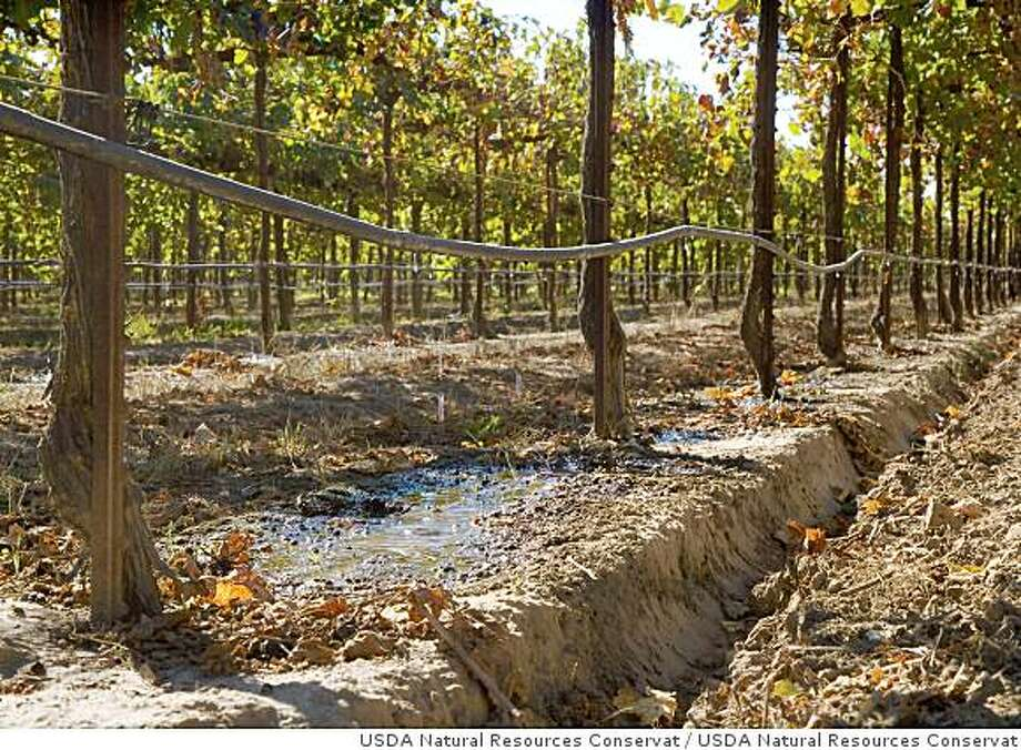 Drip irrigation in a vineyard avoids overwatering grapes. More efficient irrigation technology can help California farmers conserve water.Drip irrigation in a vineyard in California. Photo: USDA Natural Resources Conservat