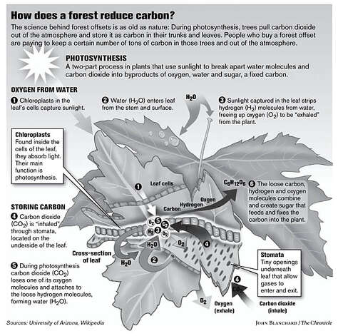 How does a forest reduce carbon? (John Blanchard / The Chronicle)