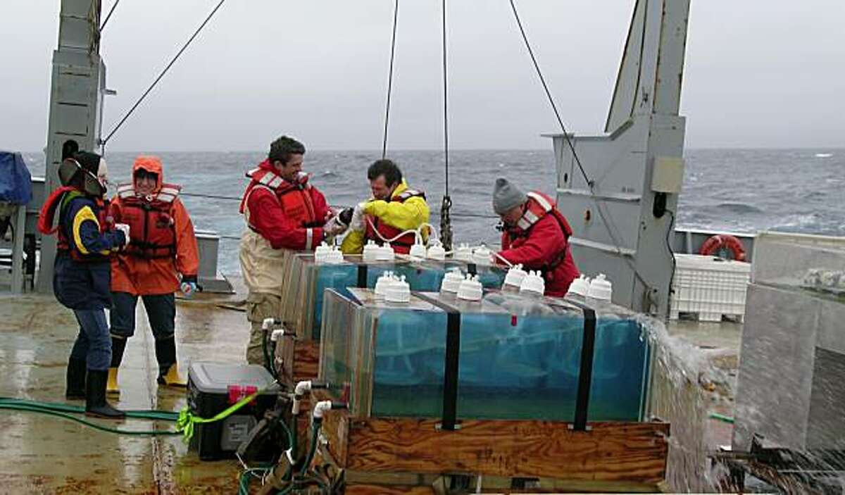 Scientists including SF State Romberg Tiburon Center scientist William Cochlan (second from right) conduct iron-enrichment experiments using deckboard incubators aboard the R/V Thomas G. Thompson in the rough seas of subarctic northeast Pacific Ocean. Taken in 2006.