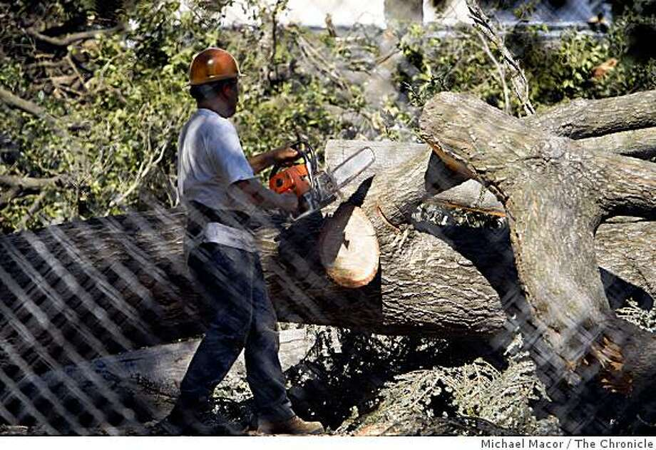 Workers begins to cut down the trees of Memorial Grove in Berkeley, Calif. on Sept. 5, 2008 as the University of California begins to clear the area next the Memorial Stadium making room for construction of a sports facility after a judge lifted an order that would have prevented the clearing of the property. Photo: Michael Macor, The Chronicle
