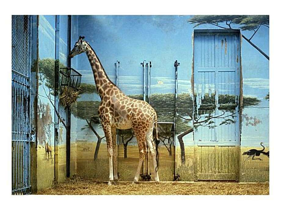 "Candida Höfer's ""Zoologischer Garten Paris II"" (1997). Photo: Rena Bransten Gallery"