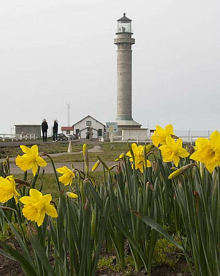 Point Arena's Flower Power Festival and Daffodil Explosion. Photo: David Mayer