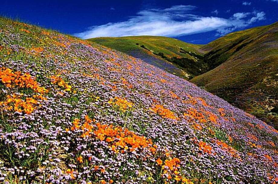 The fields of wildflowers on the hillsides of Tejon Ranch are protected by the Conservation Agreement. Photo: DMB Associates