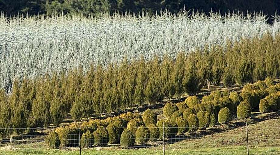 In this photo taken Monday, Feb. 8, 2010, rows of decorative bushes and trees are seen near Boring, Ore.  Across the country, the nursery and landscaping trades took a direct hit when housing starts crashed and the economy flattened. Photo: Don Ryan, AP