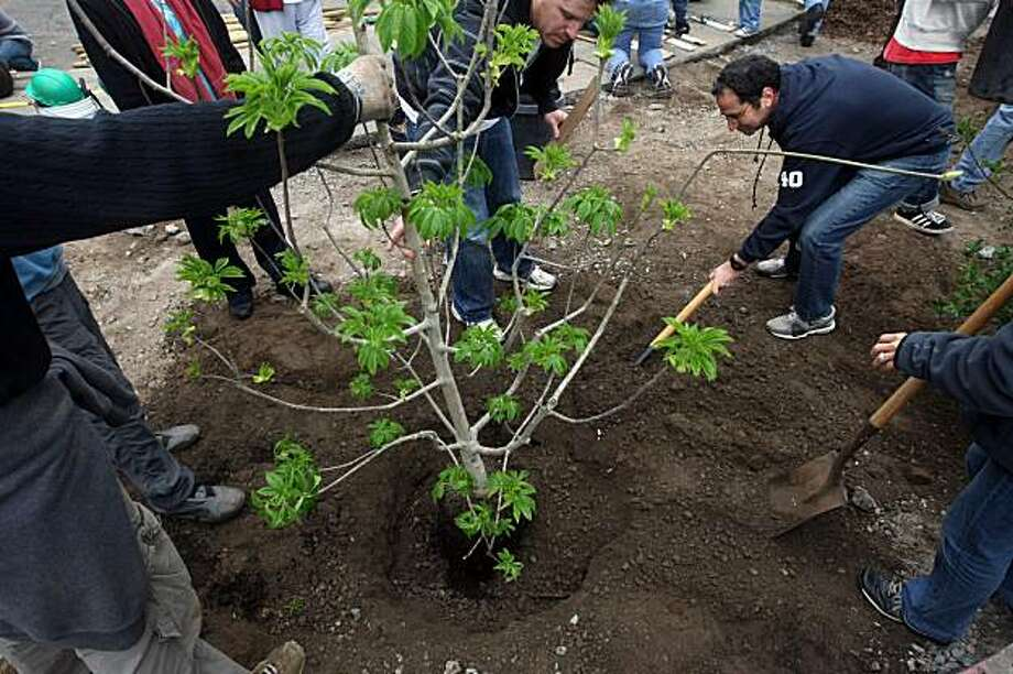 Fuad Tokad, right, and David Blumenfeld, middle, and other volunteers, work with Friends of the Urban Forest to plant 82 trees around Rosa Parks Elementary School in San Francisco Saturday morning, February 20, 2010. This is Friends of the Urban Forest's 1000th tree planting event. Photo: Erin Lubin, Special To The Chronicle