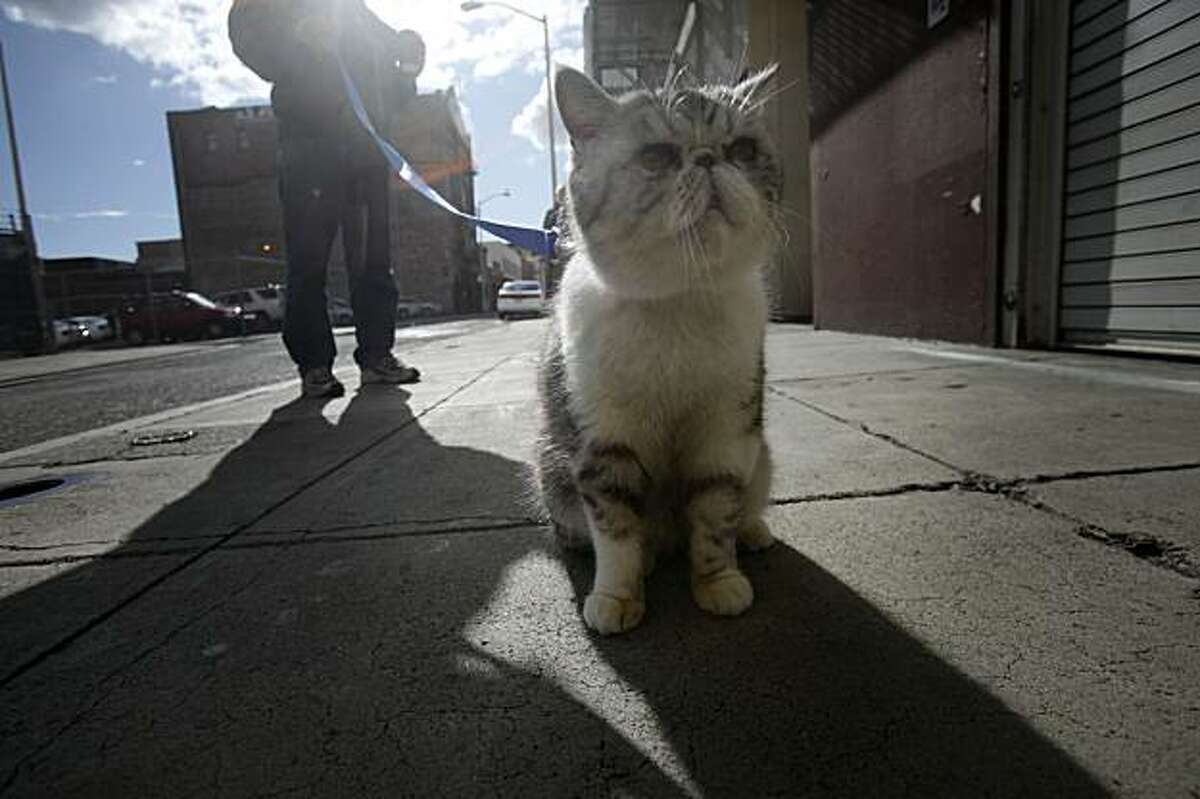 Samantha is reunited with her owner on Minna Street in San Francisco on Tuesday.