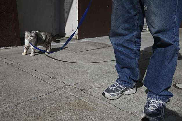 Daniel Harlan walks his cat, Samantha, down Minna Street in San Francisco on Tuesday after their reunion. Photo: Mike Kepka, The Chronicle