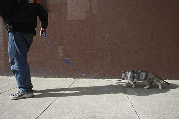 Daniel Harlan takes his cat, Samantha, down Minna Street in San Francisco on Tuesday after their reunion. Photo: Mike Kepka, The Chronicle