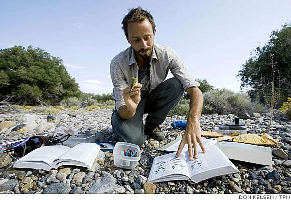 Biologist Chris McCreedy prepares to band a yellow warbler in the resurgent Rush Creek area. llustrates CALIF-MONOLAKE (category a) by Louis Sahagun (c) 2008, Los Angeles Times. Moved Monday, July 28, 2008. (MUST CREDIT: Los Angeles Times photo by Don Kelsen.)