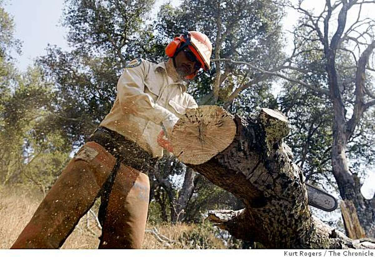 Marcos Arbello, 34, of Kentfield, Calif., works on cutting trees in Miwok Meadows inside China Camp on July 24, 2008 in San Rafael, Calif. Arbello is a seasonal parks employee and might be laid off under the governor's plan to cut state expenses in the midst of the summer budget impasse. Photo by Kurt Rogers / The Chronicle