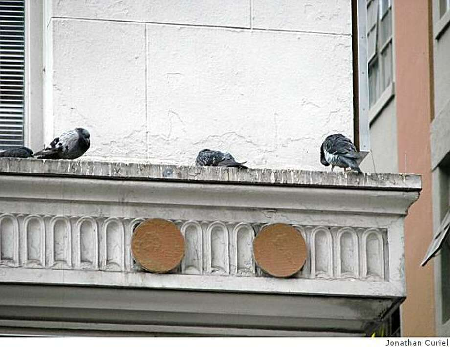 Pigeons on 1st st. in san francisco Photo: Jonathan Curiel