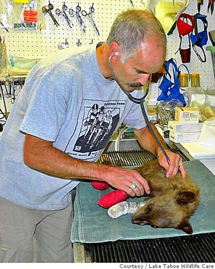 "Dr. Kevin Willitts treats ""Lil' Smokey"", a black bear cub, at Lake Tahoe Wildlife Care in South Lake Tahoe Calif., on Friday, July 18, 2008. The bear was found Thursday at the Moon Fire, a part of the Shasta-Trinity Lightning Complex. The bear had third-degree burns on all four paws and a cut above his left eye.�Photo courtesy Lake Tahoe Wildlife Care Photo: Lake Tahoe Wildlife Care, Courtesy"