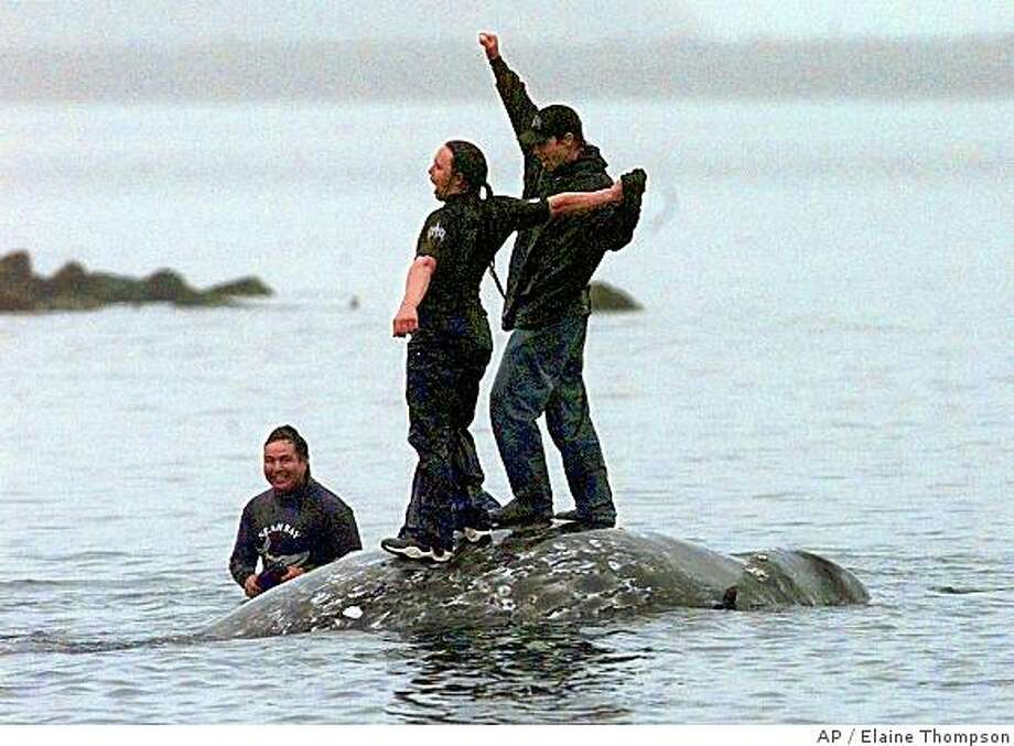 Members of the Makah Nation and the federal government disagree over the tribe's right to kill whales Photo: Elaine Thompson, AP