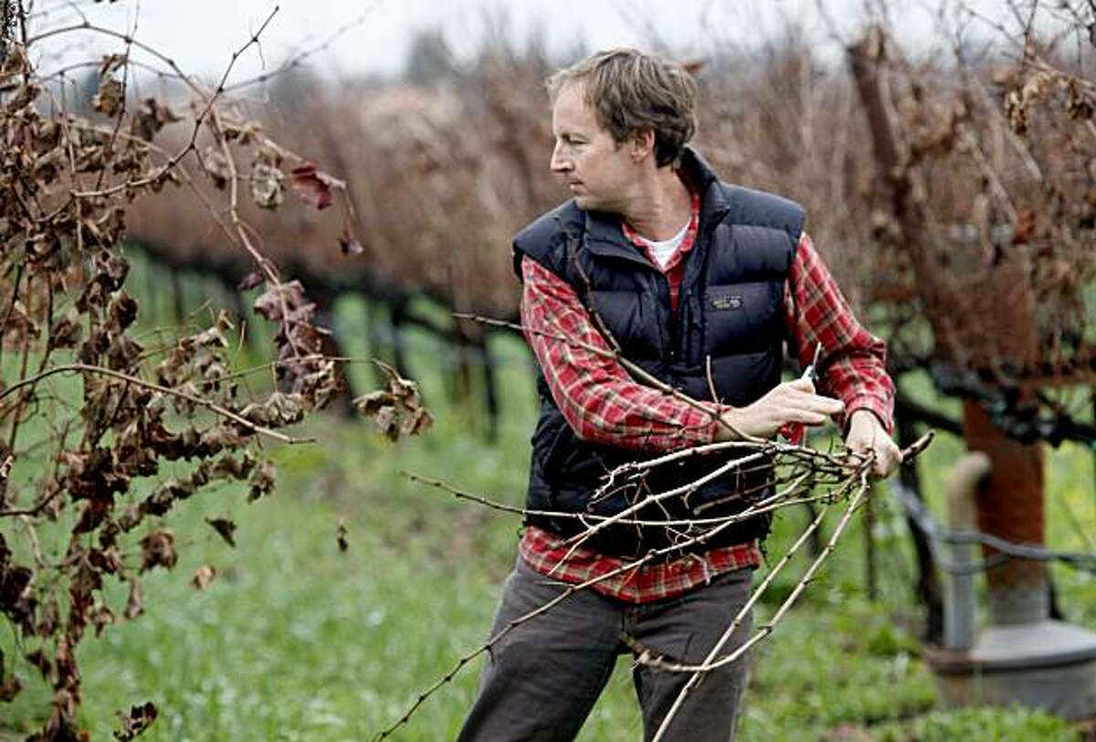 Matthiasson prunes some Merlot vines on his property. Steve Matthiasson works for other wineries by day but makes his own special red and white blends that have been well received.