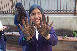 Marfeli Luna, a 5th grader at the Tutoring Center a program run at Marshall School by Mission Graduates, gets her hands dirty in the children's garden at the Mission Branch of the San Francisco Library.