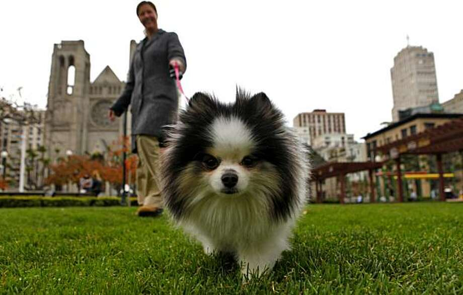 Lisa Pyrczak  walks her dog Gidget, Tuesday Dec. 15, 2009,  at the Huntington Park in San Francisco, Calif. Photo: Lacy Atkins, The Chronicle