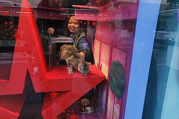 Juliet Inac, a spca volunteer, releases, Pangea into the display window for all to see on Saturday November 28, 2009. The kitten is part of the Macy's Union Square in San Francisco, Ca., holiday window project where Christmas shoppers can adopt a cat or dog on the spot. Photo: Michael Macor, The Chronicle