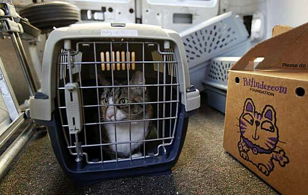 Shelter cat Polly is loaded into a van at the SPCA in San Francsico and transported to Macy's Union Square. She is part of the holiday window project where Christmas shoppers can adopt a cat or dog on the spot. Photo: Michael Macor, The Chronicle
