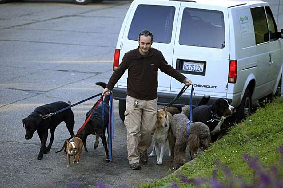 Andy Vevers, owner Dogs in the Fog, takes a group of seven dogs out on his first of four walks of the day at Buena Vista Park in San Francisco, Calif. on Thursday December 3, 2009. Photo: Lea Suzuki, The Chronicle