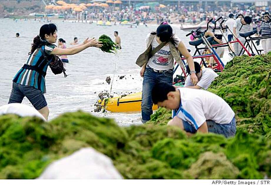 Chinese volunteers help in the clean up of a huge algae bloom at the Beijing Olympics' sailing venue in Qingdao, east China's Shandong province on June 30, 2008. The algae bloom will take at least another two weeks to eradicate despite more than 10,000 workers being used in the clean-up effort, while the environmental problem off the coast of Qingdao has disrupted training for international competitors trying to get used to the conditions there.        CHINA OUT GETTY OUT        AFP PHOTO (Photo credit should read STR/AFP/Getty Images) Photo: STR, AFP/Getty Images