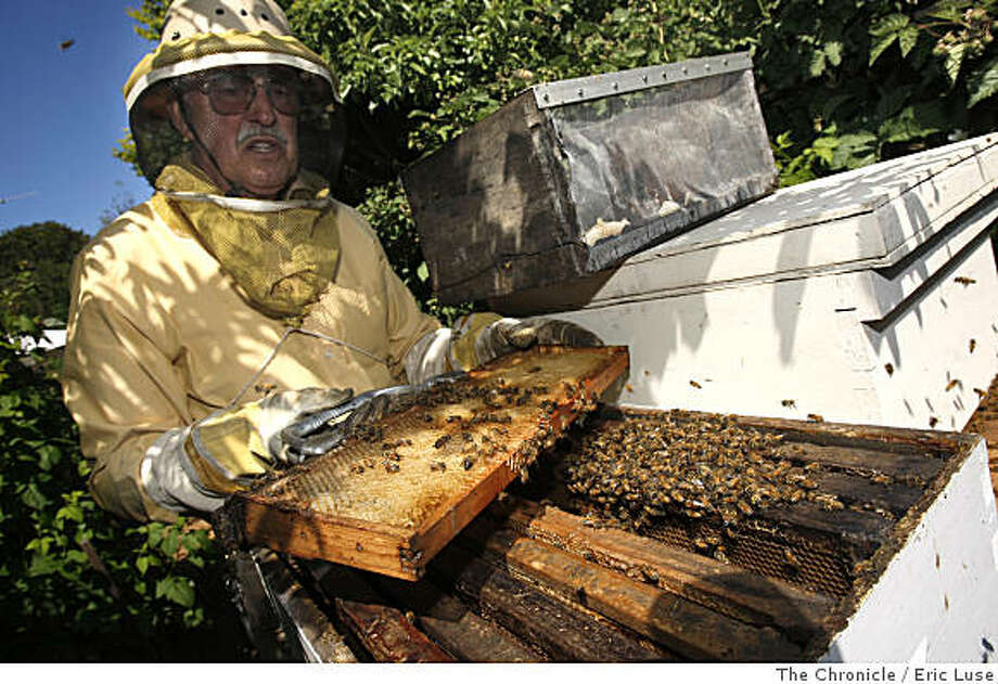David Eichorn, Kensington raspberry grower for Chez Panisse Wednesday, May 21, 2008  in his  Kensington backyard farm transfers a bee hive recovered from a local church to a hive box. He relies on the bees to pollinate his berries. Photo by Eric Luse /  San Francisco Chronicle Photo: Eric Luse, The Chronicle