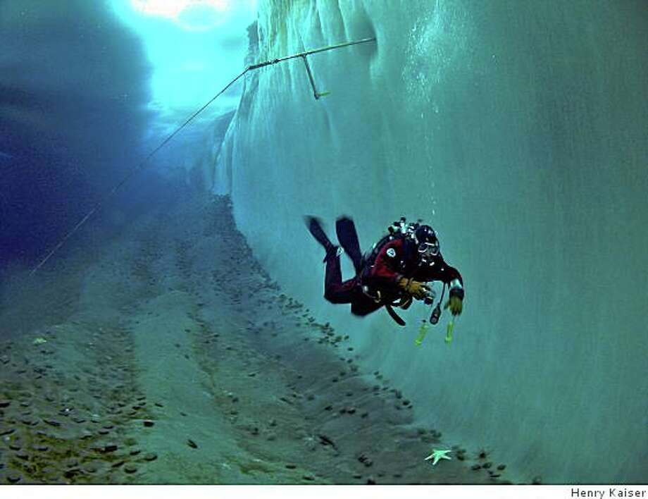 "A diver under the ice in Werner Herzog�s ""Encounters at the End of the World,"" an exploration of the people and natural surroundings of the Antarctic community of McMurdo Station, opening Friday, June 27, 2008 at Landmark�s Lumiere Theatre in San Francisco and Landmark�s Shattuck Cinemas in Berkeley. Photo Credit ? Henry KaiserOLYMPUS DIGITAL CAMERA Photo: Henry Kaiser"
