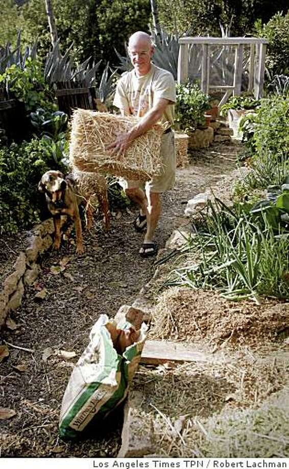 "GARDEN NODIG: Pat Marfisi carries a bale of straw. Marfisi calls Esther Deans' no-dig method of gardening ""absurdly easy."" Illustrates GARDEN-NODIG (category l) by Lisa Boone (c) 2008, Los Angeles Times. Moved Wednesday, June 18, 2008. Pat Marfisi carries a bale of straw. Marfisi calls Esther Deans� no-dig method of gardening �absurdly easy.� Illustrates GARDEN-NODIG (category l) by Lisa Boone (c) 2008, Los Angeles Times. Moved Wednesday, June 18, 2008. (MUST CREDIT: Los Angeles Times photo by Robert Lachman.) Photo: Los Angeles Times TPN"