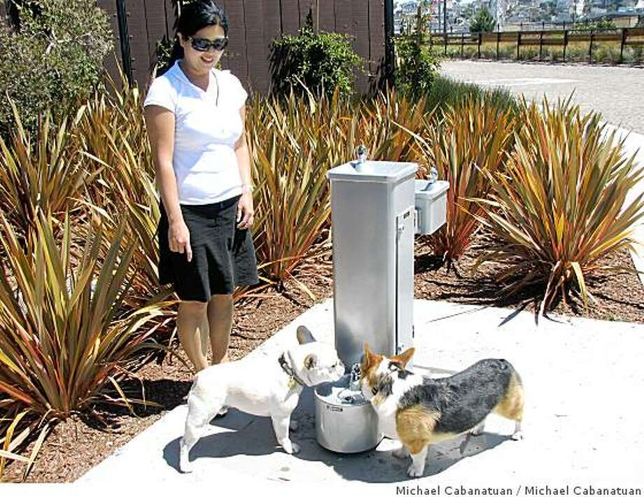 Susan Koo watches Olvier, her French bulldog, and Stewey, a friend's Corgi, drink form the new doggy drinking fountain in Mission Creek Park's dog run. Photo: Michael Cabanatuan