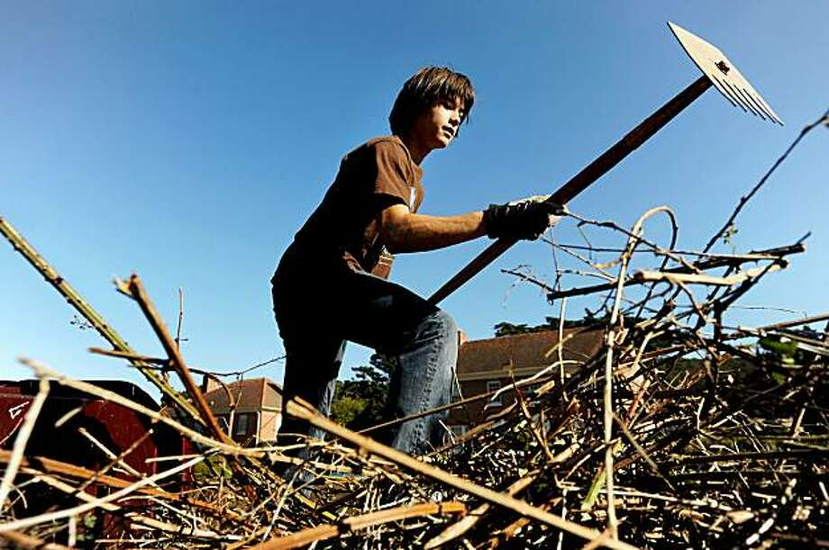 William Liang clears branches and vegetation from the Presidio's El Pollin Spring area Saturday in San Francisco. About 30 volunteers pitched in to weed and plant. Photo: Noah Berger, Special To The Chronicle