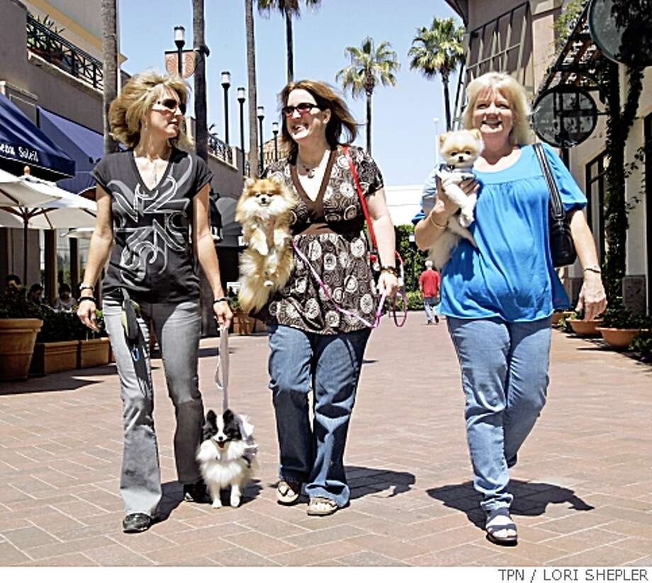 Candi Chamberlin, left, Doniqua Hoffman and Karen Russell walk their pets at Fashion Island in Newport Beach, Calif. Illustrates DOG-MALL (category a) by Susannah Rosenblatt (c) 2008, Los Angeles Times. Moved Thursday, May 15, 2008. (MUST CREDIT: Los Angeles Times photo by Lori Shepler.) Photo: LORI SHEPLER, TPN