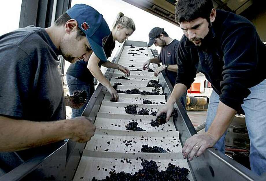 Interns (l-r) Mark Guptill, Jackie van Sant and Hunter Kerrigan join winemaker Clay Mauritson as a final batch of grapes comes into the winery. A day in the life of Healdsburg harvest interns at Mauritson Winery, Dry Creek Valley October 21, 2009. Photo: Brant Ward, The Chronicle