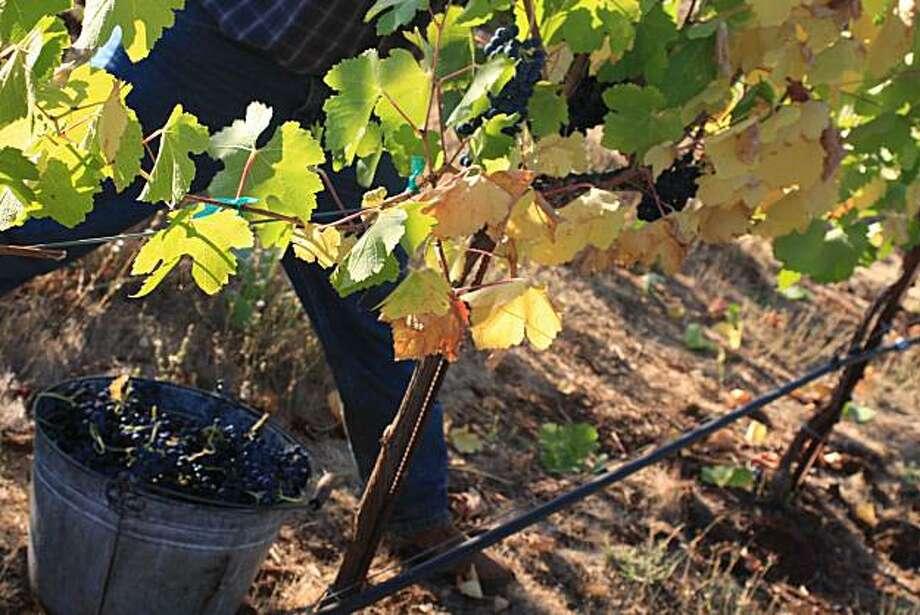 A vineyard outside Hopland (Mendocino County). Photo: Jon Bonné