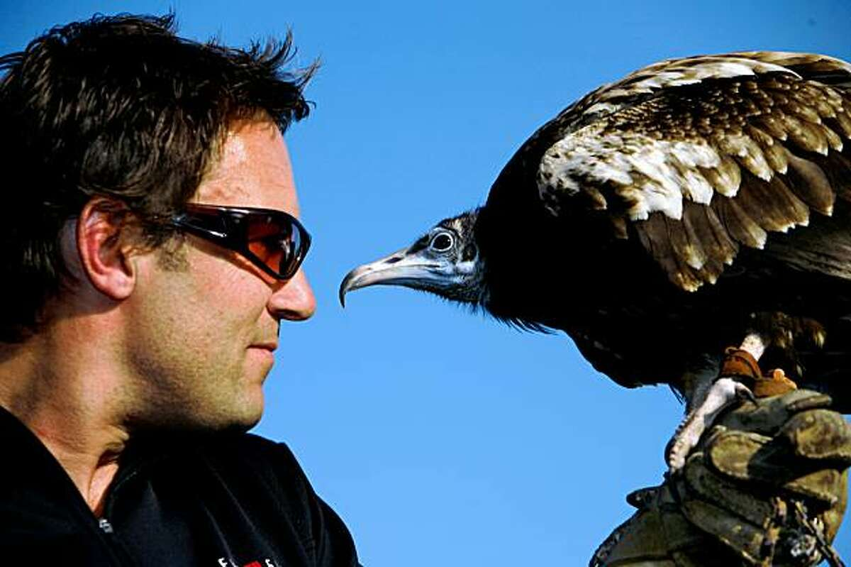 Scott Mason forges an understanding with his lead bird, an Egyptian Vulture named Kevin Neophron Percnopterus. A falconer since age 11, Mason has pioneered techniques to train raptors to scout thermals for paraglider pilots.