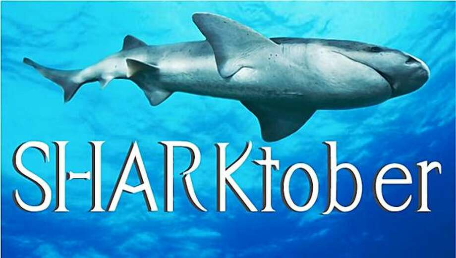 SHARKtober takes place throughout October at the Aquarium of the Bay. Photo: Aquarium Of The Bay