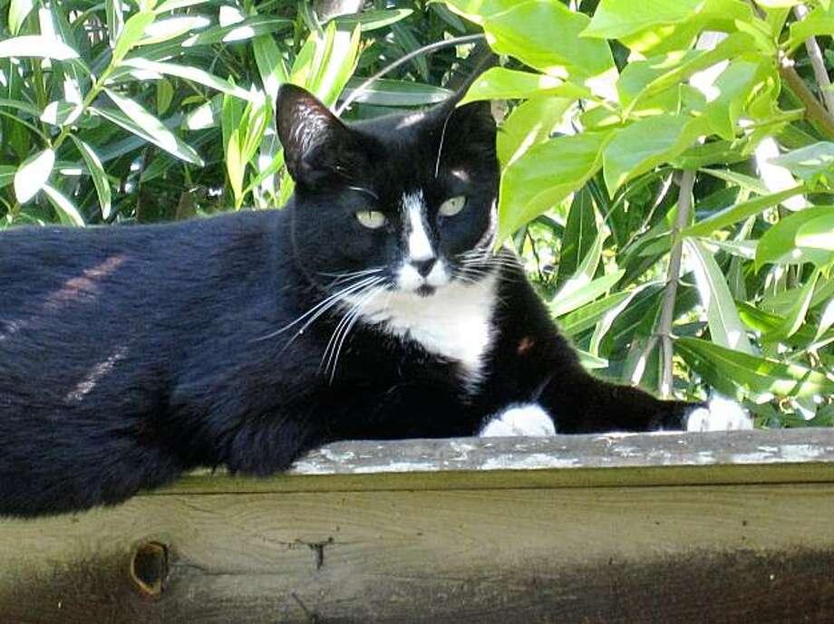 Rosie the cat Photo: John Madsen