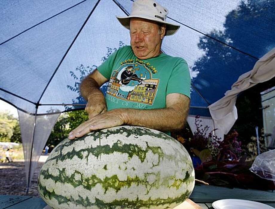 Mike Kent slices into an oversized Carolina Cross watermelon at Nine Palms Ranch in San Jose, Calif., on Tuesday, Sept. 22, 2009. Photo: Paul Chinn, The Chronicle