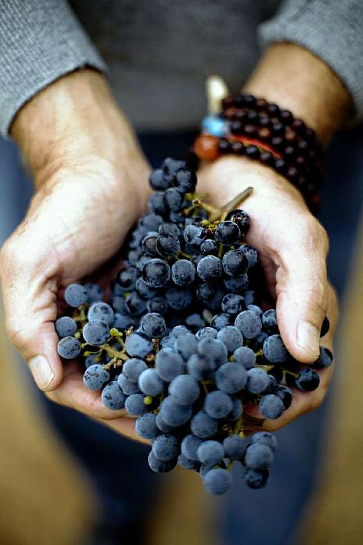 Vintner Dick Grace, of Grace Family Vineyards, in St. Helena, who created the first cult Cabernet, is a practicing buddhist who has been sober for 21 years, holds cabernet grapes, on Monday, August 31, 2009. Prayer beads wrap his right wrist.