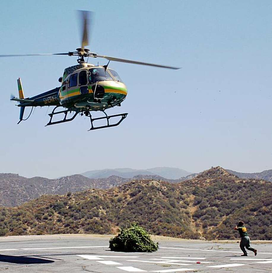 This image provided by the Los Angeles Sheriff's Department shows a helicopter during a marijuana eradication operation Sept. 12, 2009 in the Angeles National Forest just north of Los Angeles. Cultivation of marijuana, often by Mexican drug cartels, is rife in California's national forests, and the steep, scrub-covered canyons only a short drive from Los Angeles are no exception. Even before the blaze, authorities had removed record amounts of pot with an estimated street value of more than $2 billion. Photo: Los Angeles Sheriff's Department, AP