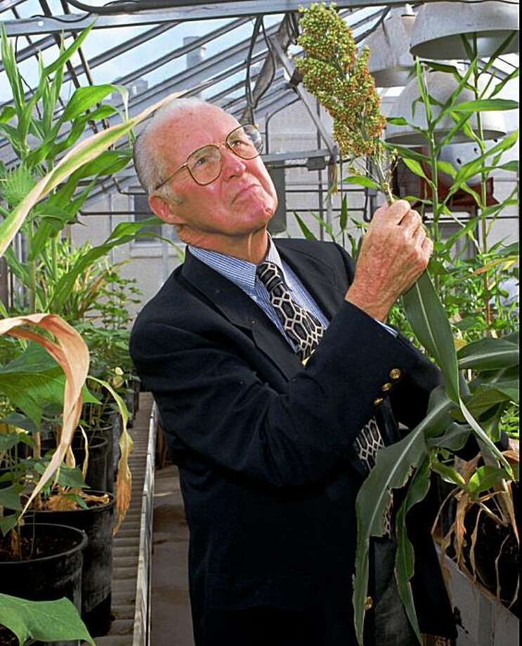 "File - Norman Borlaug, visiting professor at Texas A&M University,  and the 1970 Nobel Prize recipient, looks over some sorghum tests in this Oct. 30, 1996 file photo taken in one of A&M's teaching greenhouses, in College Station, Texas. The Nobel Prize-winning agricultural scientist has died in Texas at age 95. Texas A&M University spokeswoman Kathleen Phillips said Borlaug died just before 11 p.m. Saturday Sept. 12, 2009 at his home in Dallas. Known as the father of the ""green revolution,"" Borlaug won the Nobel Peace Prize for his role in combating world hunger. (AP Photo/Bill Meeks, File) Photo: Bill Meeks, File, AP"