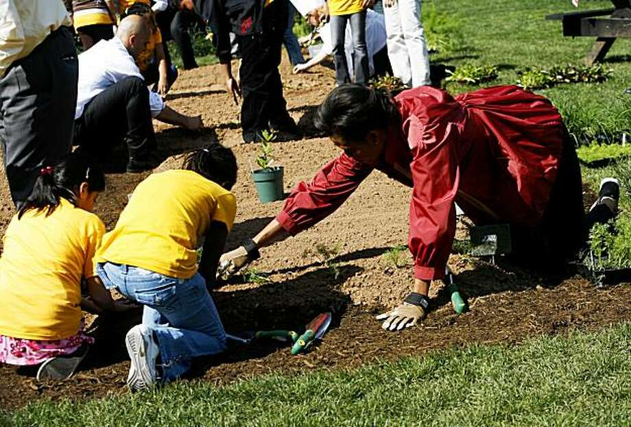 US First Lady Michelle Obama works in her Kitchen Garden on the South Lawn of the White House April 9, 2009 planting seedlings. She was joined by children from Bancroft Elementary, the school that participated in the groundbreaking of the Garden on March 20. Students from the school will return later this year for harvesting and cooking with the food grown.  AFP PHOTO/Aude GUERRUCCI (Photo credit should read Aude GUERRUCCI/AFP/Getty Images) Photo: Aude Guerrucci, AFP/Getty Images