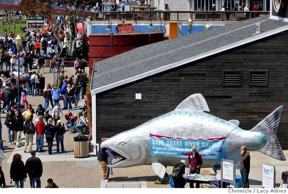 ###Live Caption:Save out Wild Salmon Road show displays a monstrous 25 foot fiberglass salmon at Pier 39, Sunday April 20, 2008, to make people aware of the shortage of Snake River sockeye wild salmon. The road show is enroute to Washington DC. Lacy Atkins / San Francisco Chronicle###Caption History:Save out Wild Salmon Road show displays a monstrous 25 foot fiberglass salmon at Pier 39, Sunday April 20, 2008, to make people aware of the shortage of Snake River sockeye wild salmon. The road show is enroute to Washington DC. Lacy Atkins / San Francisco Chronicle###Notes:###Special Instructions:MANDATORY CREDIT FOR PHOTOG AND SAN FRANCISCO CHRONICLE/NO SALES MAGS OUT Photo: Lacy Atkins