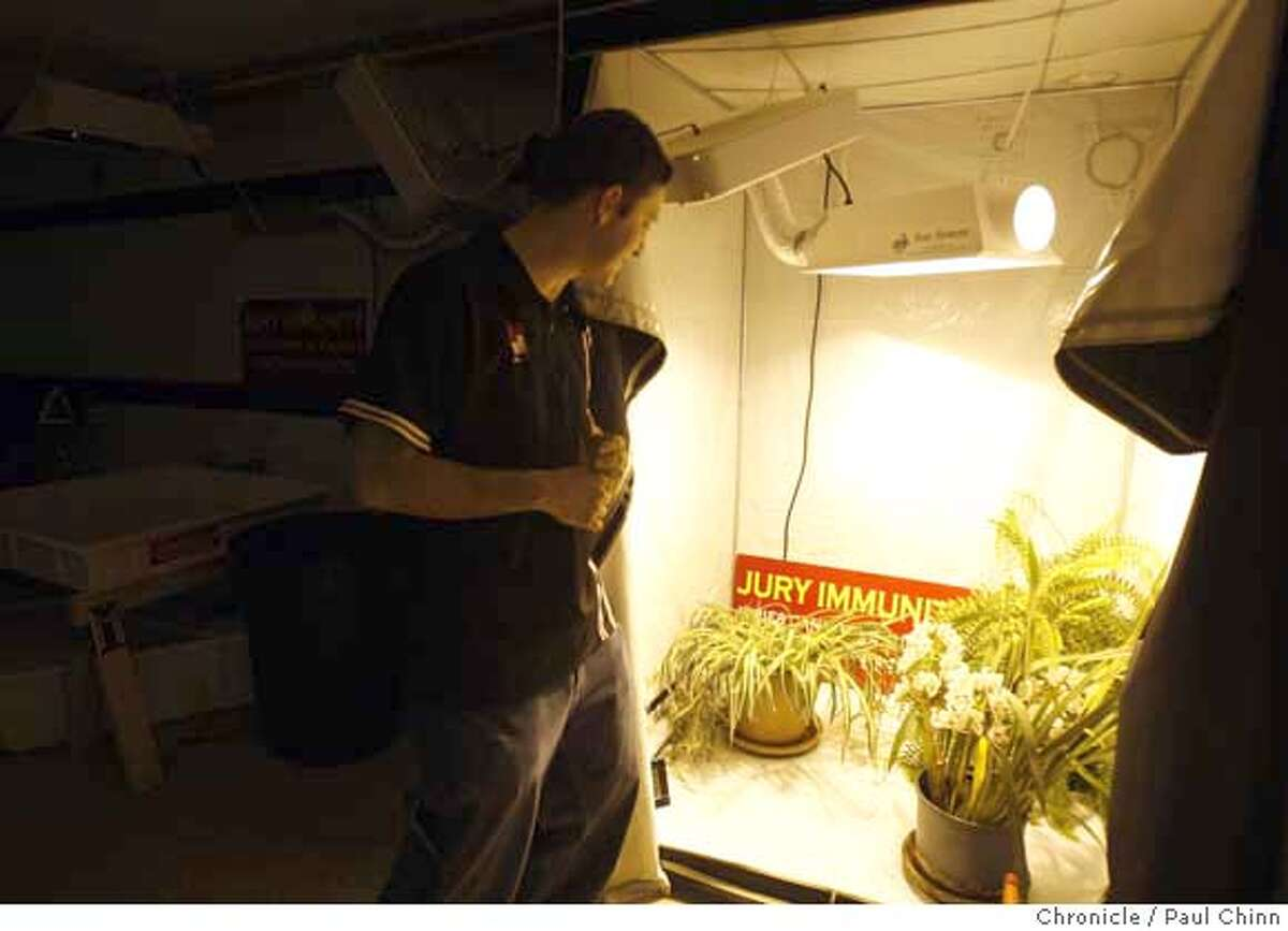 ###Live Caption:Ilia Gvozdenovic, an instructor at Oaksterdam University, monitors house plants in an indoor growing closet at the school's lab in Oakland, Calif., on Tuesday, April 15, 2008. The curriculum covers legal and horticultural issues for people interested in operating medicinal marijuana clubs. Photo by Paul Chinn / San Francisco Chronicle###Caption History:Ilia Gvozdenovic, an instructor at Oaksterdam University, monitors house plants in an indoor growing closet at the school's lab in Oakland, Calif., on Tuesday, April 15, 2008. The curriculum covers legal and horticultural issues for people interested in operating medicinal marijuana clubs. Photo by Paul Chinn / San Francisco Chronicle###Notes:Ilia Gvozdenovic###Special Instructions:MANDATORY CREDIT FOR PHOTOGRAPHER AND S.F. CHRONICLE/NO SALES - MAGS OUT