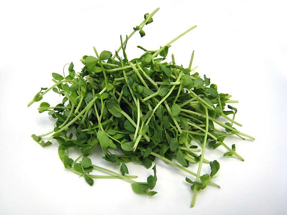 Pea sprouts are harvested year-round and can be found in Asian grocery stores. Photo: Erick Wong, SFC