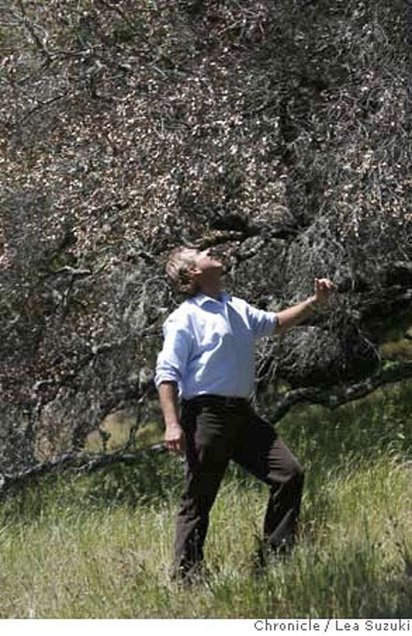 ###Live Caption:UC Berkeley Professor Matteo Garbelotto checks the dryness of a dying Oak tree on Mt. Tam near San Anselmo, Calif. on Wednesday, April 16 2008. UC Berkeley Professor Matteo Garbelotto, who has been studying Sudden Oak for a decade, has pinpointed where it started in the wild -- Mt. Tam and Santa Cruz. Photo By Lea Suzuki/ San Francisco Chronicle###Caption History:UC Berkeley Professor Matteo Garbelotto checks the dryness of a dying Oak tree on Mt. Tam near San Anselmo, Calif. on Wednesday, April 16 2008. UC Berkeley Professor Matteo Garbelotto, who has been studying Sudden Oak for a decade, has pinpointed where it started in the wild -- Mt. Tam and Santa Cruz. Photo By Lea Suzuki/ San Francisco Chronicle###Notes:###Special Instructions:�2008, San Francisco Chronicle/ Lea Suzuki  MANDATORY CREDIT FOR PHOTOG AND SAN FRANCISCO CHRONICLE. NO SALES- MAGS OUT. Photo: Lea Suzuki