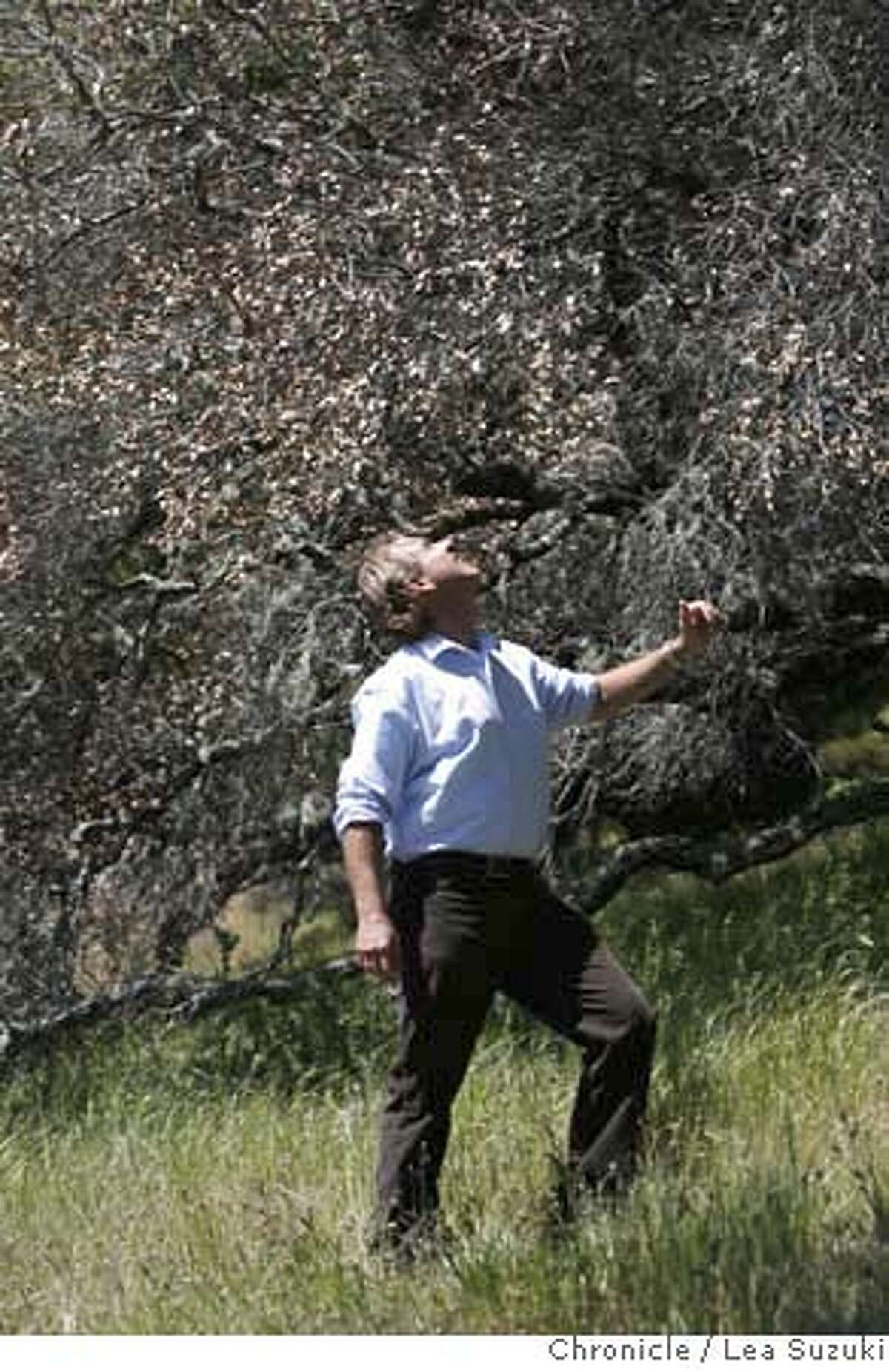 ###Live Caption:UC Berkeley Professor Matteo Garbelotto checks the dryness of a dying Oak tree on Mt. Tam near San Anselmo, Calif. on Wednesday, April 16 2008. UC Berkeley Professor Matteo Garbelotto, who has been studying Sudden Oak for a decade, has pinpointed where it started in the wild -- Mt. Tam and Santa Cruz. Photo By Lea Suzuki/ San Francisco Chronicle###Caption History:UC Berkeley Professor Matteo Garbelotto checks the dryness of a dying Oak tree on Mt. Tam near San Anselmo, Calif. on Wednesday, April 16 2008. UC Berkeley Professor Matteo Garbelotto, who has been studying Sudden Oak for a decade, has pinpointed where it started in the wild -- Mt. Tam and Santa Cruz. Photo By Lea Suzuki/ San Francisco Chronicle###Notes:###Special Instructions:�2008, San Francisco Chronicle/ Lea Suzuki MANDATORY CREDIT FOR PHOTOG AND SAN FRANCISCO CHRONICLE. NO SALES- MAGS OUT.
